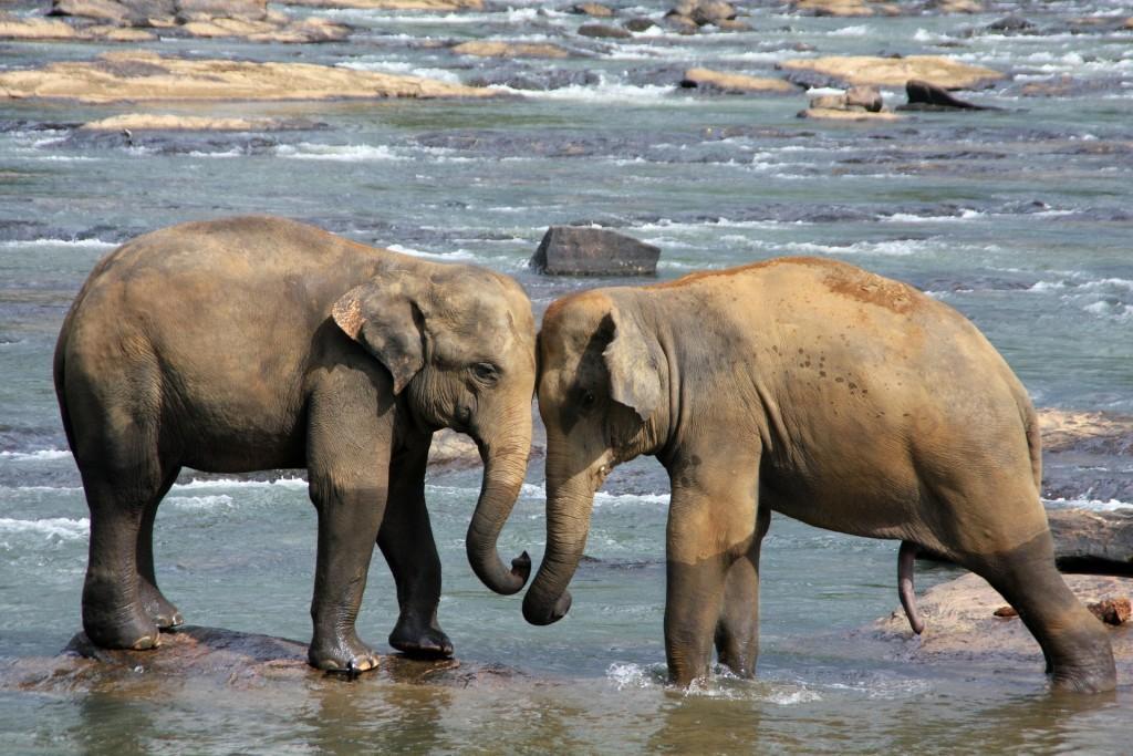elephant-471480_1920